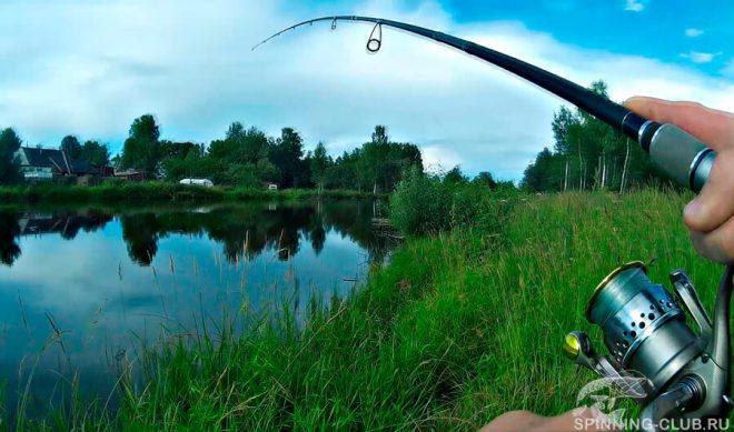 Как ловить щуку с берега на спиннинг — все о береговой рыбалке