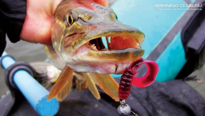 Ловля щуки на твистер: рыбачим правильно