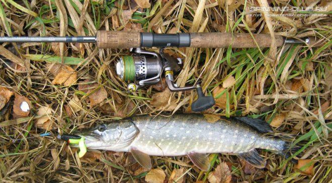 Ловля щуки осенью на спиннинг: тонкости и нюансы успешной рыбалки
