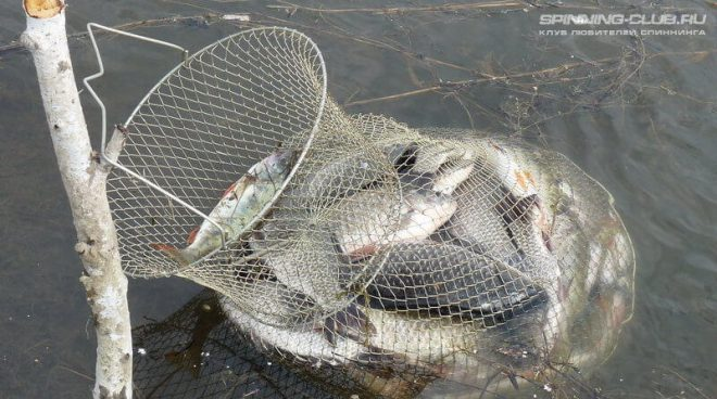 Садок для рыбы: незаменимый помощник рыболова