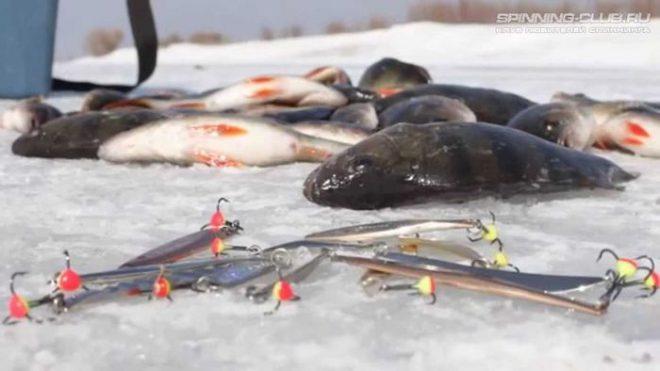 Ловля окуня на зимние блесна со льда